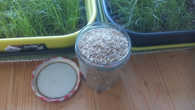 Grassamen und Saatschalen