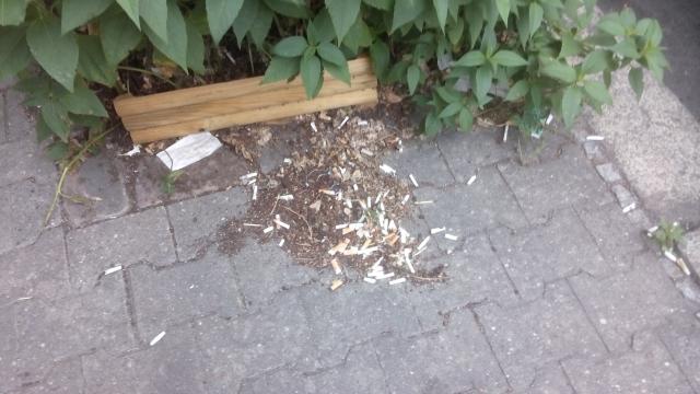 Berliner Gehweg, Straßenbaumbeet und Zigarettenkippen