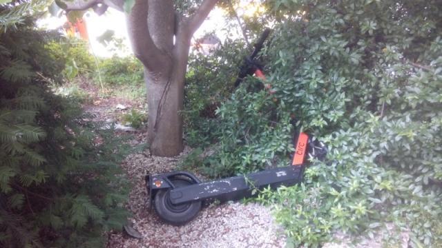 Ist das Müll und kann das weg? Elekroroller in der Berliner Stadtnatur